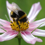 Solar power plant saves the UK bumblebee
