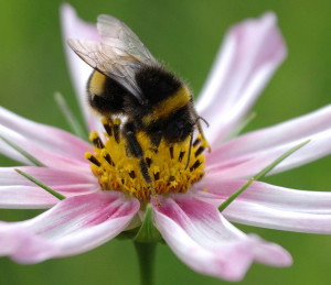 Solar power plant saves bumblebee