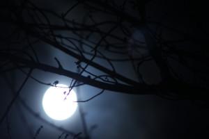 photovoltaic at night
